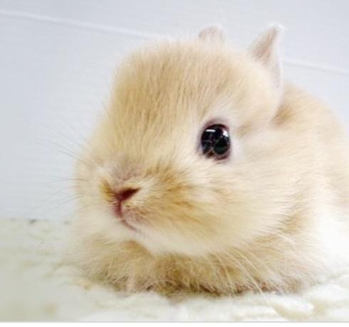 Who doesn't like Bunnies?