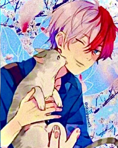 Todoroki and cat